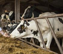 Optimising Milk from Forage